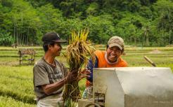 Happy rice farmers